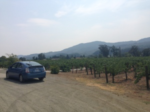 The Kronos Vineyard
